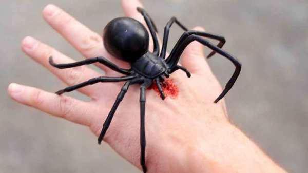giant-black-widow-spider-bite